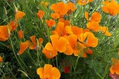 Blumen-2